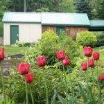 1000 tulipes